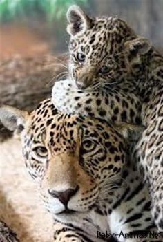 Sweet leopard