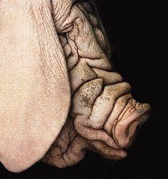 Tim Flach pig portrait. His mother loves him....