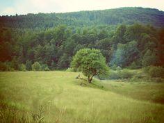 Yavoryna-2014 by Lana Neman on 500px