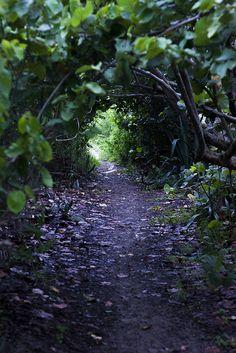 Purple trail....