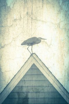 Coastal Fine Art  heron rooftop vintage by photographybyVena, $30.00