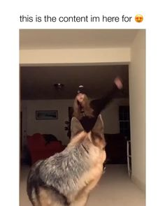 dog I can't even get my dog to stop barking ? dog I can't even get my dog to stop barking ?,Cute Dogs dog I can't even get my dog to stop barking ? Cute Puppies, Cute Dogs, Dogs And Puppies, Cute Babies, Doggies, Funny Babies, Cute Funny Animals, Cute Baby Animals, Funny Cute