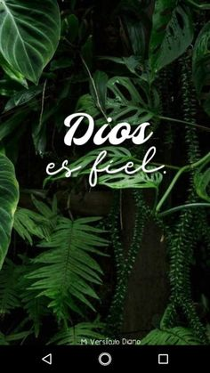 Dios es fiel🙏 Gods Love Quotes, Faith Quotes, Christian Love, Christian Quotes, Pray More Worry Less, In Christ Alone, Faith Hope Love, God First, Jesus Loves Me