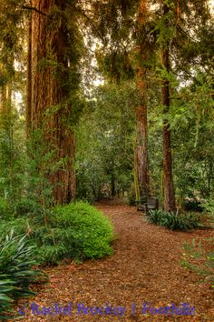 Secret Garden Path, rear of Descanso Gardens, California