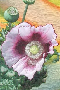 Hermosa Poppies art quilt by Barbara Barrick McKie. Poppies Art, Floral Quilts, Poppy Pattern, Glass Garden, Rug Hooking, Quilt Patterns, Quilt Pattern, Quilting Patterns, Quilt Block Patterns