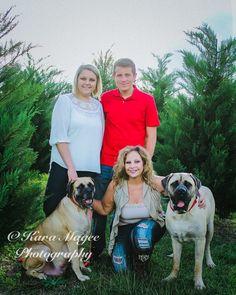 Christmas Portraits Dogs, English Mastiff