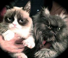 Grumpy Cat & Colonel Meow