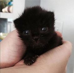 Kedi aşığı