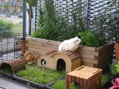 Potted plants in a guinea pig enclosure Guinea Pig Run, Guinea Pig Hutch, Guinea Pig House, Diy Guinea Pig Toys, Bunny Cages, Hamster Cages, Hamsters, Rabbit Enclosure, Guniea Pig