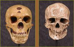 NOVA special on Neanderthals-comparison of skulls