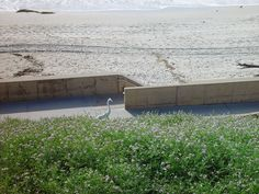 South Carlsbad State Beach is a great for beach-goers and features a campground site.