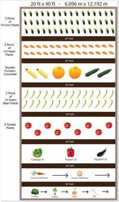 Raised Vegetable Garden Plans | Building a raised vegetable garden bed? Free garden plans, pictures ...