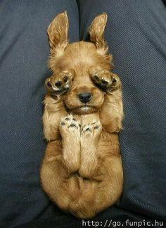 Shhhh! I'm hiding! Haha