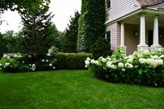 Best Shrubs to Hide Utility Boxes and AC Units Spruce Tree, Blue Spruce, Hide Ac Units, Norway Spruce, Privacy Plants, Foundation Planting, Cool Plants, Hedges, Beautiful Landscapes