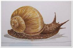 snail, nature, watercolor, illustration