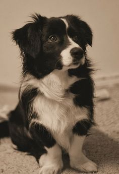 cute mutt. <3 mutts they truly are one of a kind!