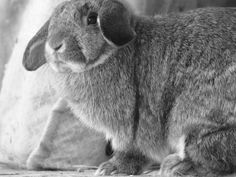 Meet Athena on yummypets.com #rabbit