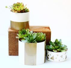 SUCCULENTS Go for the green, | 10 DIY Ways To Ring In The Spring