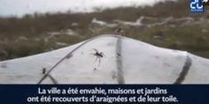 Certaines périodes de l'année, en Australie, de jeunes araignées jettent leurs fils dans l'air et les utilisent comme des parachutes pour se déplacer ...