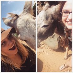 FAMILY members Britni and Colleen hanging out with some donkeys in Aruba at the Donkey Sanctuary!