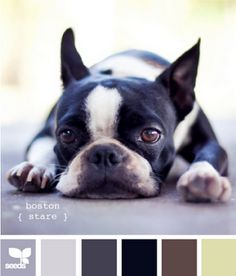 definitely need to take my color schemes from my dogs!