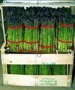Asparagus Jersey Gem DGS30089A (Green) 25 Hybrid Seeds by David's Garden Seeds David's Garden Seeds http://www.amazon.com/dp/B00DPXQDGE/ref=cm_sw_r_pi_dp_aIhfvb1M1R9WB