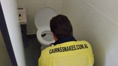Snake Removal, Removal Services, Feral Cats, Cairns, Toilet, How To Remove, Couple, Facebook, Animal