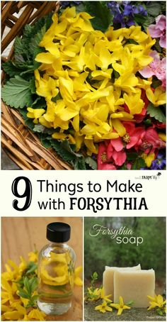 9 Things to Make with Forsythia Flowers 9 Creative Things to Make with Forsythia Flowers. Forsythia flowers are edible and can be used to make food and DIY beauty care recipes. Here are 9 fun, pretty and practical ways to use forsythia flowers. Healing Herbs, Medicinal Plants, Natural Healing, Herbal Plants, Diy Beauty Care, Beauty Tips For Face, Beauty Hacks, Beauty Ideas, Face Tips