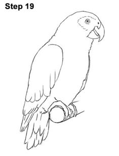 Learn how to draw an African Grey Parrot with this how-to video and step-by-step drawing instructions. Easy Animal Drawings, Bird Drawings, Cartoon Drawings, Easy Drawings, Parrot Drawing, Parrot Painting, Painting & Drawing, Drawing Pics, Drawing Projects