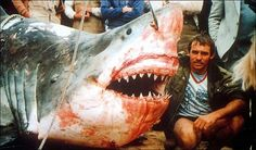 Vic Hislop and the biggest great white shark ever caught Big Great White Shark, Largest Great White Shark, Big Shark, The Great White, Orcas, All About Sharks, Sharks, Xenomorph, Pisces