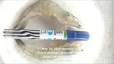 May 26 2020 Shrimp Harvest Catering Menu, Harvest, Shrimp, Restaurant, Stuffed Peppers, Fish, Make It Yourself, Twist Restaurant, Pisces