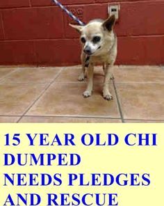 A1344988 My name is Pepe and I'm an approximately 15 year old male chihuahua sh. I am already neutered. I have been at the Downey Animal Care Center since April 7, 2015. I am available on April 7, 2015. You can visit me at my temporary home at D716. https://www.facebook.com/photo.php?fbid=848850008528666&set=pb.100002110236304.-2207520000.1428518406.&type=3&theater
