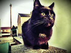 Cole HD 2 #cat