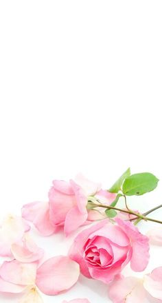 new Ideas wallpaper iphone quotes pink valentines day Glam Wallpaper, Wallpaper Iphone Disney, Flower Wallpaper, Tumblr Backgrounds, Flower Backgrounds, Wallpaper Backgrounds, Quotes Pink, Oriflame Cosmetics, Pink Iphone