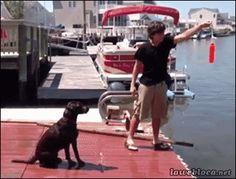 Dog Dot Com Gif #71 - Funny Dog Gifs| Funny Gifs| Dog Gifs