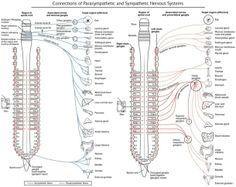 Memocharts Pharmacology The Autonomic Nervous System