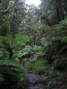 New Zealand - Walk from Jackson Bay to Smoothwater River