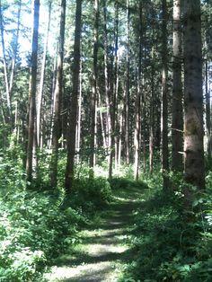 Hiking_wandern: Nähe Örflaschlucht Richtung St. Arbogast  Fotot@Tschola 2014