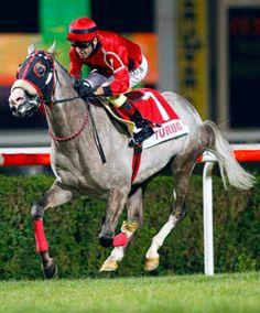 Ücretsiz Şanlıurfa At Yarışı Tahminleri