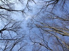 Trees Trees, Clouds, Wallpaper, Nature, Outdoor, Tree Wallpaper, Flowers, Outdoors, Naturaleza