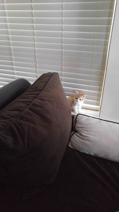 Our new roommate Morty has already proven himself hide-and-seek champion. http://ift.tt/2rdlHyy