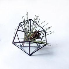 Glass Ikosaeder Florarium