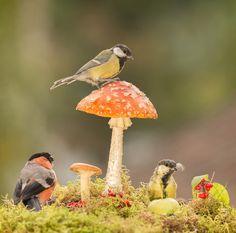 titmouse mushroom view by geertweggen #animals #animal #pet #pets #animales #animallovers #photooftheday #amazing #picoftheday