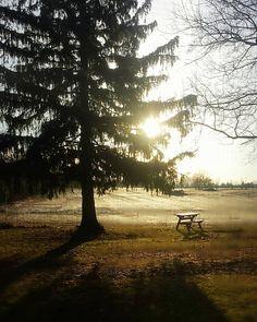 A golden morning. #photography #photo #scenic #beautiful #landscape #sunrise #Michigan #puremichigan #outdoors #travel #nature #williamston