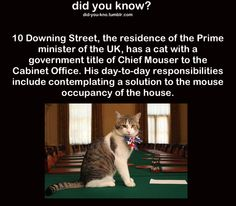 British humor is good humor. Animal Facts, Animal Memes, Funny Animals, Funny Photos, Funny Images, Getting A Kitten, British Humor, Good Humor, Wtf Fun Facts