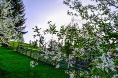 Spring in Bran, near the Bran Castle, at Brătescu Mansion. Romania, Vineyard, Castle, Pure Products, Mansions, Spring, Outdoor, Outdoors, Manor Houses