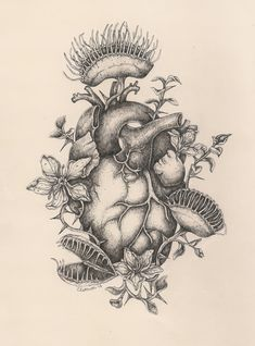 anatomical heart squid - Google Search