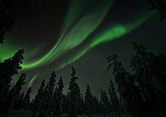 Auroras in the woods - Revontulet metsässä - Minor Postcards Santa Claus Village, Aurora Borealis, Natural World, Finland, Northern Lights, Nature, Naturaleza, Santa's Village, Northen Lights