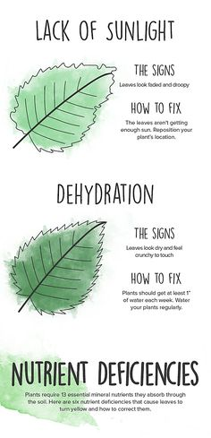 Oh, and don't freak out if your plants turn yellow — just look at this explainer: 17 Charts For People Who Love Plants But Can't Keep Anything Alive Yellow Leaves On Plants, Plant Leaves, Bean Garden, Lawn And Garden, Bean Plant, Fotografia Macro, Bush Beans, House Plant Care, Planting Vegetables