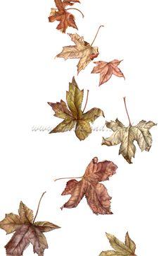 Falling Leaves Wallpaper Blackberry Botanical Illustration Of Two Blackberry Vines One From